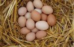 Яйца перепелиные и куриные при язве желудка
