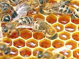 """Пчелы используют прополис для строительства сот как """"клей"""""""