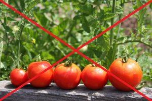 Переедание томатами не желательно